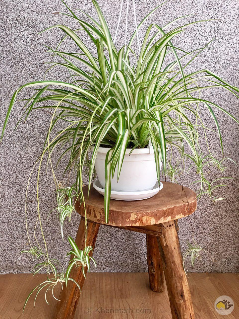 گیاهان آپارتمانی سازگار با نور کم