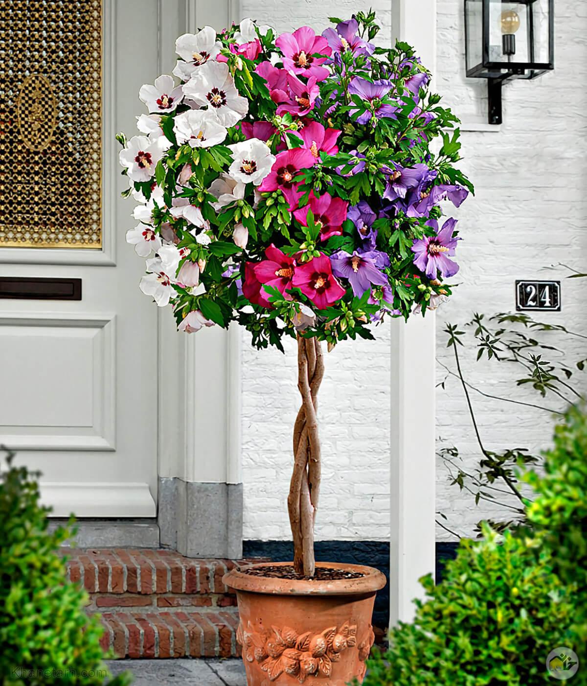 زیباترین گلهای آپارتمانی