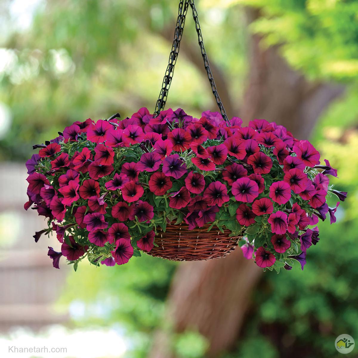 اسامی گلها با عکس