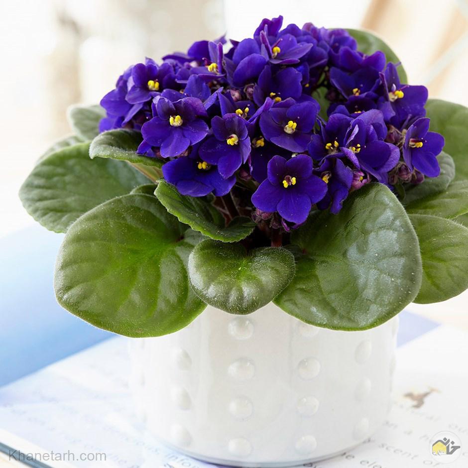انواع گلهای آپارتمانی